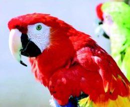 Ce perroquet utilise une Amazon Echo pour passer des commandes…sur Amazon