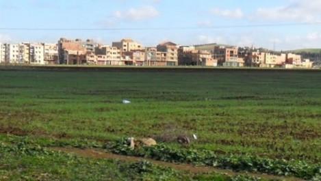 In-Salah : création de neuf nouveaux périmètres agricoles pour les jeunes