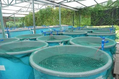 L'aquaculture à Mostaganem, une filière en hibernation : Que des murs à l'horizon !