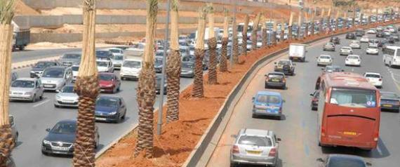Alger: Près de 1000 palmiers morts remplacés sur l'autoroute Zeralda-Dar El Beida