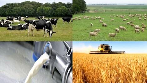 BADR de GUELMA: Des crédits Rfig aux agriculteurs