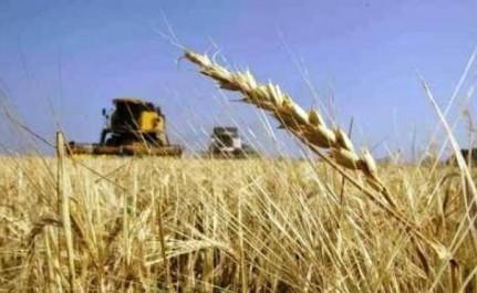 Rationalisation de l'importation des céréales: mise en place d'un Comité de veille et d'évaluation