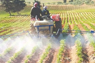 Algérie: Projet de création de deux nouveaux périmètres agricoles à Illizi