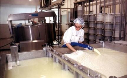 Agriculture: Vers une forte relance de la filière du lait