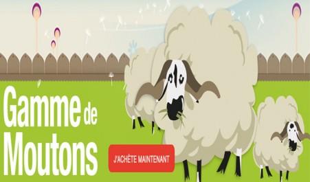 Vente en ligne du mouton de l'Aïd El-Adha : Ce qu'en pensent les Algériens