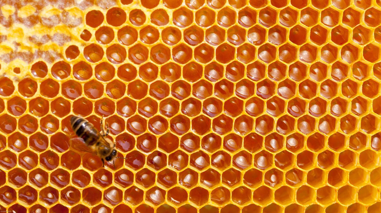 Mostaganem 230 ruches d abeilles d truites par les - Dessin de ruche d abeille ...