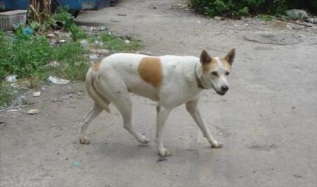 Tissemsilt : Prolifération des chiens errants dans plusieurs quartiers