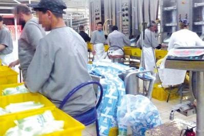 Pour optimiser la production à Guelma : Séminaire régional sur la filière lait