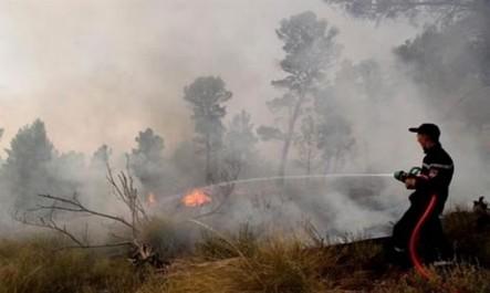 Forêts: 697 hectares parcourus par les feux en une semaine (DGF)