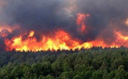 Guelma: Trois incendies ravagent 50 ha de couvert végétal