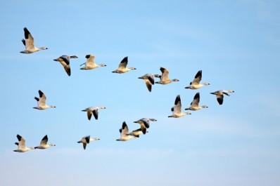 Les oiseaux de Kabylie et «L'invention du désert» de Tahar Djaout