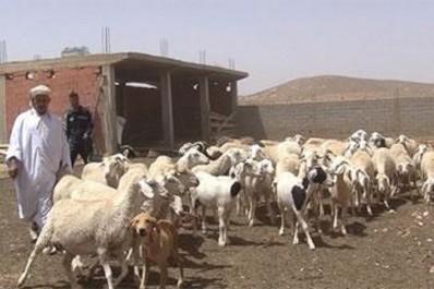 Retour à la subvention de l'aliment du bétail: Les éleveurs expriment leur satisfaction