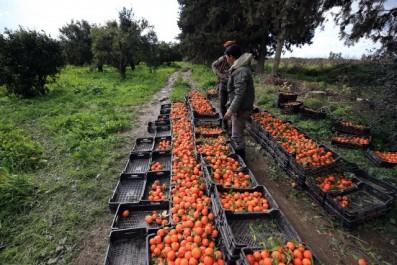 Les produits agricoles algériens à l'honneur à Bordeaux (France)