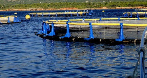 Algérie : Installation en mer des équipements de projets en conchyliculture à El Kala