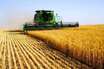 Sécheresse : les prix des céréales flambent sur les marchés mondiaux