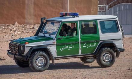 Aïn Defla : La gendarmerie saisit 1 485 chardonnerets