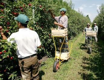 Sétif : Les étudiants se forment au montage de projets dans l'agriculture