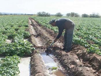 Irrigation agricole a l'ouest de pays : Une étude pour exploiter les eaux de l'oued Cheliff