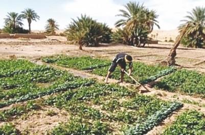 Prés de 7 milliards DA d'indemnisation accordées aux agriculteurs en 2018