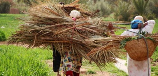 500 femmes rurales bénéficient des dispositifs d'aide de l'Etat A El Tarf