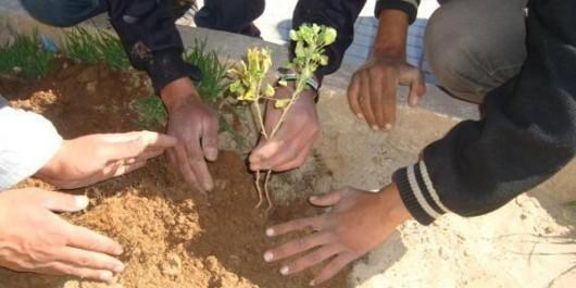 Plus de 3.600 arbustes seront plantés dans la wilaya de Ghardaia