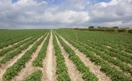 Seuls 8,5 millions d'hectares pour l'agriculture ! : Le foncier agricole menacé par le béton