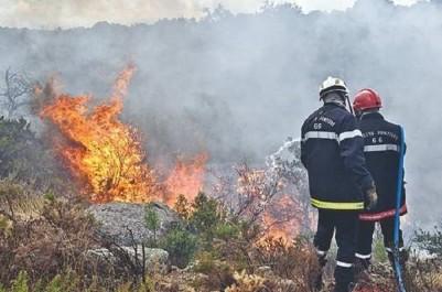 Algérie-Feux de forêts : 655 millions de dinars pour compenser les populations sinistrées