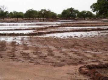 Des terres agricoles inondées par les eaux usées