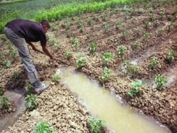 Alors que les meetings aux chefs-lieux sont en majorité annulés : Les villageois préfèrent vaquer à leurs travaux des champs
