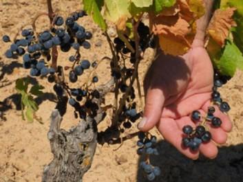 Réchauffement climatique : Des agricultrices en première ligne face à une sécheresse «historique»