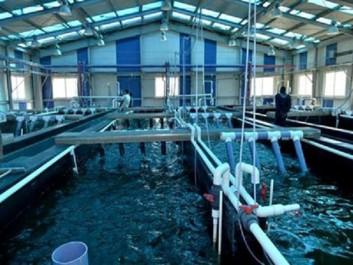 7ème Salon international de la pêche et de l'aquaculture : 300 participants attendus à Oran