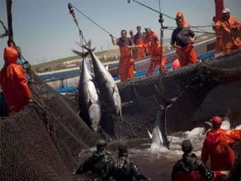Pêche et aquaculture : La tutelle accélère la mutation du secteur vers une phase plus productive