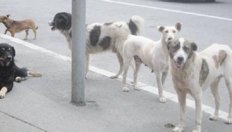 Khenchela : 10 écoliers attaqués et blessés par des chiens errants