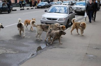 Bouira: La menace des chiens errants
