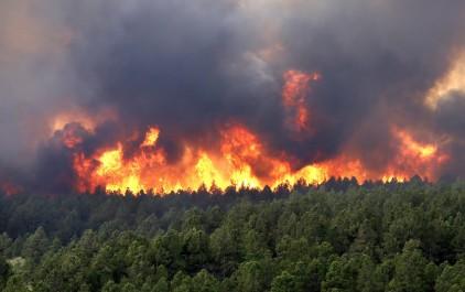 Incendies de forêts: La DGF procède à l'indemnisation des victimes, 655 millions da mobilisés