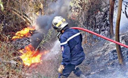 Chlef: Près de 180 ha de forêts partis en fumée cet été