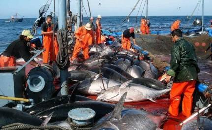 Le quota de pêche de thon rouge de l'Algérie pour 2018 porté à 1.306 tonnes