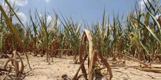 Plus de 220 millions de personnes sous-alimentées en Afrique subsaharienne (FAO)