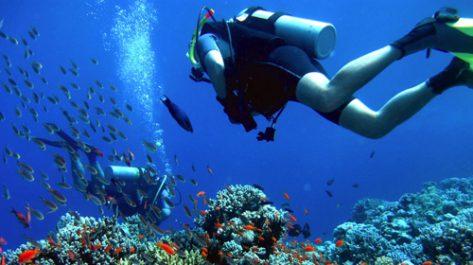 Pêche, aquaculture et corail
