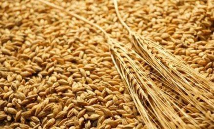 Céréales subventionnées: Les modalités de péréquation des frais de transport fixées