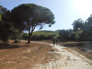 AÏN-TÉMOUCHENT : Aménagement de plusieurs forêts pour les éventuels investisseurs