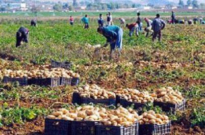 Tizi ouzou, carrefour des agriculteurs mercredi prochain : Un grand gisement d'investissements