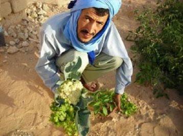El oued: futur eldorado du monde agricole vert, le Sud