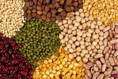 Elle passera de 100 à 400 hectares: Augmentation de la superficie destinée aux légumes secs