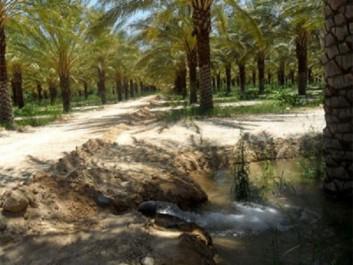 Biskra : L'eau d'irrigation, souci majeur des agriculteurs