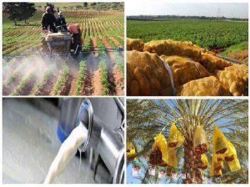 Produits agricoles : La production nationale assure 70% de nos besoins