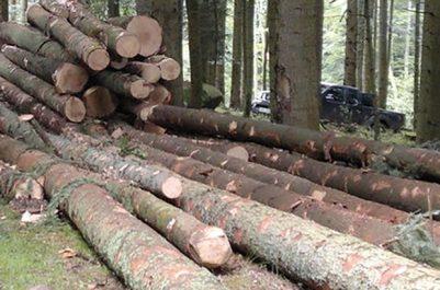Pour se chauffer à KANOUAÂ (SKIKDA) : L'exploitation du bois des forêts autorisée