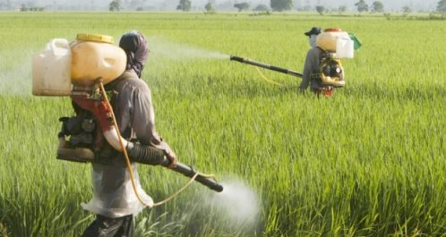 Agriculture : Journée de formation sur la protection phytosanitaire à Tizi Ouzou
