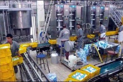 Production laitière en algérie : Heurs et malheurs d'une filière