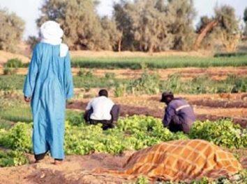 Séminaire régional sur le drainage et son impact sur la production agricole : Comment faire du Sahara une vraie Californie